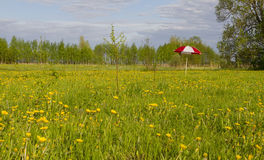 Umbrella in meadow Royalty Free Stock Images