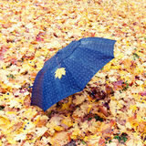 Umbrella in the park covered with maple leaves Royalty Free Stock Images