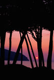 Umbrella pines at sunset Royalty Free Stock Images