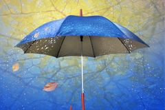 Umbrella in rain by autumn. With drop and sheet royalty free stock images