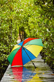 Umbrella in rain Royalty Free Stock Photo