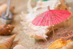 Umbrella sea shells on sandy tropical beach. Stock Photo