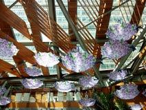Umbrella shades. Purple umbrella shades with wooden roof Royalty Free Stock Photos