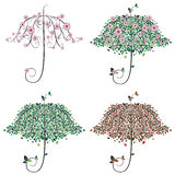 Umbrella Shape Tree Stock Image