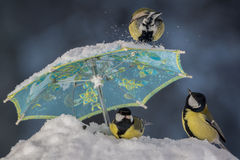 Umbrella story Royalty Free Stock Image