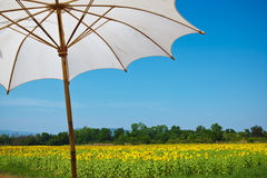 Umbrella in sunflower field Royalty Free Stock Images