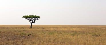 Serengeti national park Stock Photography