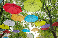 Umbrellas in fall in the trees in Netherlands. Umbrellas in fall in the trees in the Netherlands Royalty Free Stock Photo
