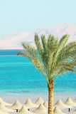 Umbrellas, Palm Tree, Mountains And Red Sea Royalty Free Stock Image