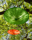 Umbrellas in a tree Royalty Free Stock Images
