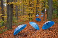 Umbrellas in the wood. Blue umbrellas on a track in the wood Stock Photo