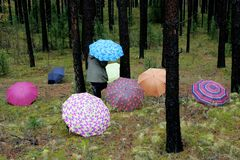 Umbrellas in the woods royalty free stock image