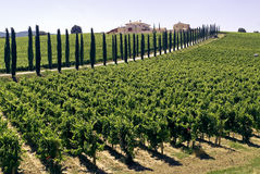 Umbrië - Landbouwbedrijf met wijngaarden en cipressen stock foto