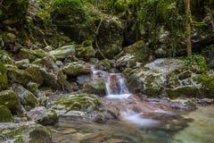 Umbria forest paradise Royalty Free Stock Photo