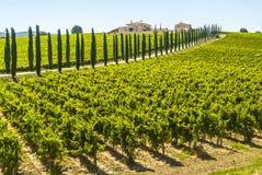 Umbria - lantgård med vingårdar och cypresses arkivbilder