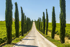 Umbria - väg med cypresses fotografering för bildbyråer