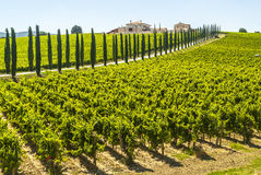 Umbria - Farm with vineyards and cypresses Stock Images