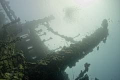 Umbria ship wreck in red sea. A view outside umbria ship wreck in Sudan red sea Royalty Free Stock Image