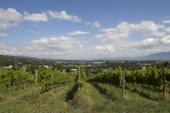 Umbria wineyard Stock Photos