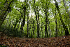 The Umbrian forest. The Umbra forest in Gargano National Park, Puglia, Italy Stock Images