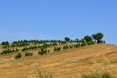 Umbrian landscape Stock Photography