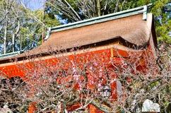 Ume blomningar i delvis blom, Kitano Tenmangu Shrine, Kyoto Royaltyfria Bilder