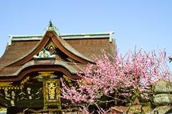 Ume blomningar och huvudbyggnad i Kitano Tenmangu Shrine, minnestavlan med namn för relikskrin` s, Kyoto, Arkivfoton