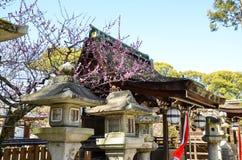Ume blomningar och huvudbyggnad i Kitano Tenmangu Shrine, minnestavlan med namn för relikskrin` s, Kyoto, Arkivbild