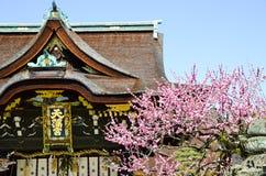 Ume blomningar och huvudbyggnad i Kitano Tenmangu Shrine, minnestavlan med namn för relikskrin` s, Kyoto, Fotografering för Bildbyråer