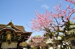 Ume blomningar och huvudbyggnad i Kitano Tenmangu Shrine, minnestavlan med namn för relikskrin` s, Kyoto Royaltyfri Fotografi