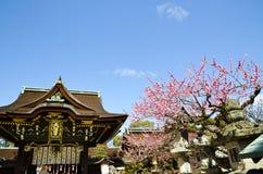 Ume blomningar och huvudbyggnad i Kitano Tenmangu Shrine, minnestavlan med namn för relikskrin` s, Kyoto Royaltyfri Foto