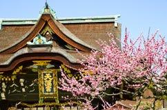 Ume blomningar och huvudbyggnad i Kitano Tenmangu Shrine, minnestavlan med namn för relikskrin` s, Kyoto Arkivfoton