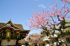 Ume Blossoms and Main Building in Kitano Tenmangu Shrine, the Tablet with Shrine`s name, Kyoto Royalty Free Stock Photography