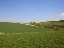 Umfangreicher Weizen erntet in Burdale auf den Yorkshire-Wolds im Frühjahr Stockbild