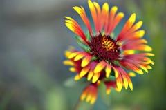 Umfassende Blume Lizenzfreies Stockfoto