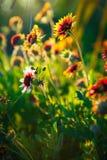 Umfassende Blumen Stockfotos