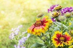 Umfassende Blumen im Blumenbeet Lizenzfreies Stockbild