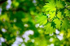 Umgebungshintergrund Lizenzfreies Stockfoto