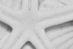 Umgedrehte Starfish auf einem Bett von Seahells Lizenzfreie Stockbilder