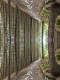 Umgedrehte Waldfiktion Lizenzfreies Stockbild