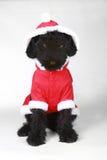 Umgekippter schwarzer Russe-Terrier-Welpe in Santa Suit Lizenzfreie Stockfotos