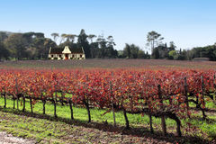 Umhang vinyard Lizenzfreies Stockfoto