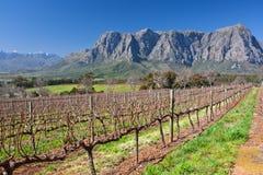 Umhang wineland Lizenzfreie Stockfotos