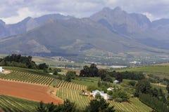 Umhang Winelands Stockbilder