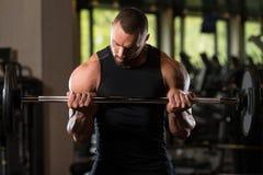 Umięśnionej samiec Wzorcowi Ćwiczy bicepsy Z Barbell Obraz Royalty Free