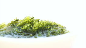 Umibudou, Green Caviar (Caulerpa lentillifera) Grape seed seaweed stock video footage