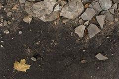 A umidade escura do outono moeu com partes de emplastro Fotos de Stock Royalty Free