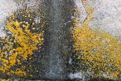 Umidità della parete Fotografia Stock Libera da Diritti