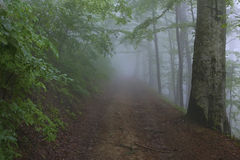 Umidità nella foresta Fotografie Stock