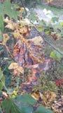 umierający liści, zdjęcie stock